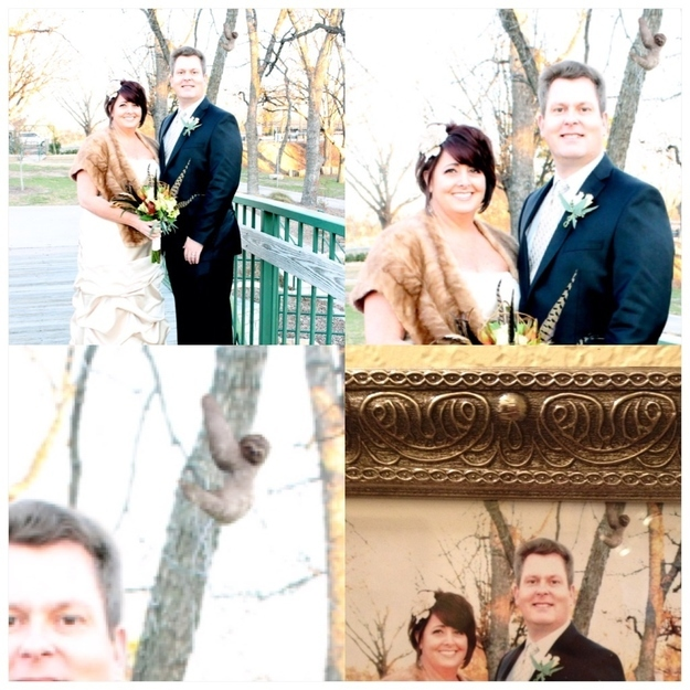 Wedding photobomb #4:  Sloths are not known for their extrovert characters so being upstaged by one on your wedding day must be a real low point.