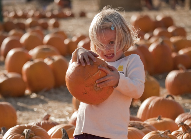 A 4 year old girl shows off the pumpkin she picked from the pumpkin patch.