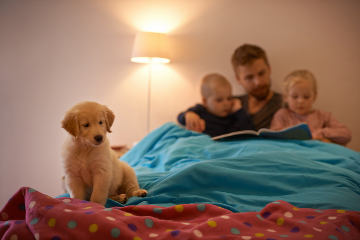 kids and pets share bed