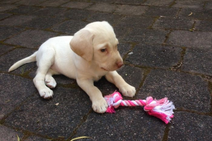 Little girl's stolen puppy returned by 'remorseful' thieves after appeal